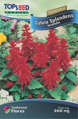 Semente Flor Sálvia Splendens Incêndio