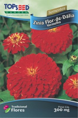 Semente Flor Zínia Flor-Dália, Vermelho