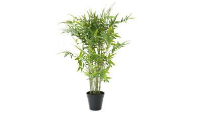 Dracena Bambu 2,0m Pote 20