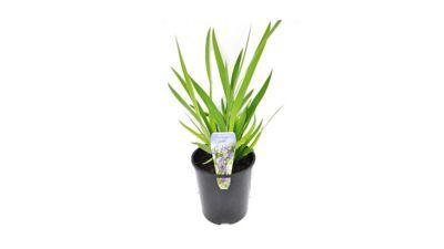 Iris Pote 3,0 Litros