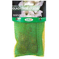 Bulbo gladiolo 4 unidades Blanco