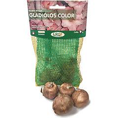 Bulbo gladiolo 4 unidades rosado