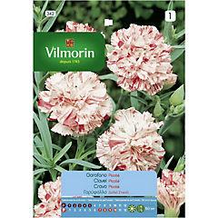 Semilla flor clavel chabaud rosado 5 gr sachet