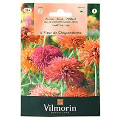 Semilla flor zinnia de crisantemo 5 gr sachet