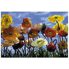 Papel fotomural Poppy 368 cm 8 paneles