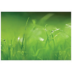 Papel fotomural Fondo verde 254x368 cm 8 paneles