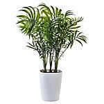 Mini palmera