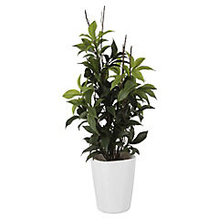 Laurus artificial con macetero
