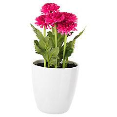 Crisantemo artificial 24 cm fucsia con macetero