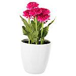 Maceta Crisantemo 24 cm