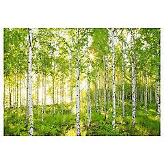 Papel fotomural Bosque 264x368 cm