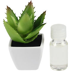 Difusor planta té verde