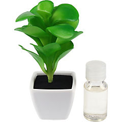 Difusor planta jasmín