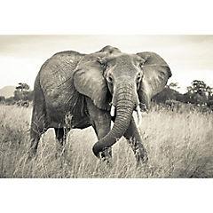 Fotomural Elefante 3,68x2,48 m