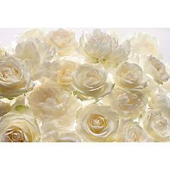 Fotomural Rosas blanca 3,68x2,48 m