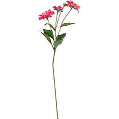Dahlia Andree 67 cm rosado