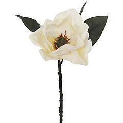Magnolia 71 cm crema