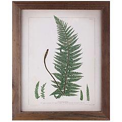 Cuadro 30x38 cm botanica antique
