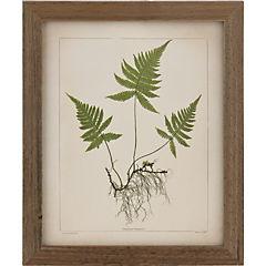 Cuadro 30x38 cm botanicas c/raíz