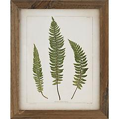 Cuadro 30x38 cm 3 botanicas antique