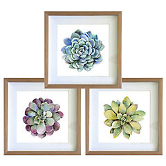 Set 3 cuadros 30x30 cm marco madera  suculentas