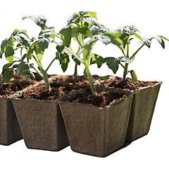 Almaciguera biodegradable 4 unidades