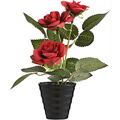 Arreglo rosas rojas 18 cm base cerámica