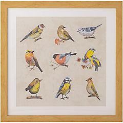 Cuadro conjunto pájaros 50x50 cm