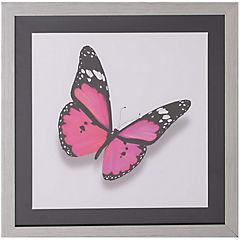 Cuadro mariposa fucsia 50x50 cm
