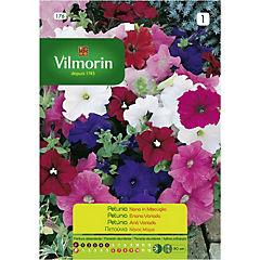 Semilla flor petunia enana 5 gr sachet