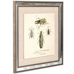 JUST HOME COLLECTION - Cuadro Escarabajos 46x46 cm