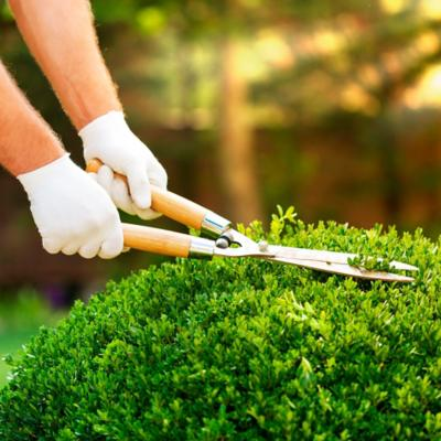 Tijeras jardín