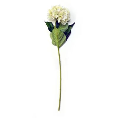 Vara de hortensia crema
