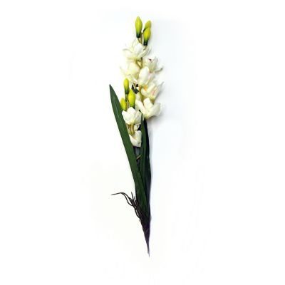 Orquídea con raíz y hojas crema