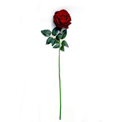 Rosa cabbage aterciopelada rojo