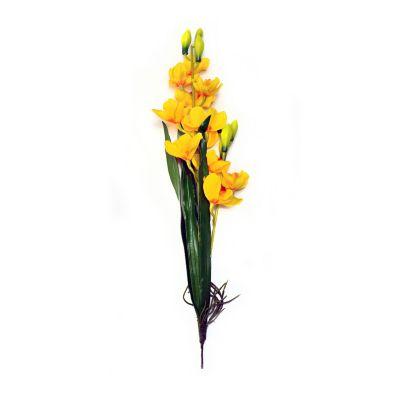 Orquídea con raíz y hojas amarilla