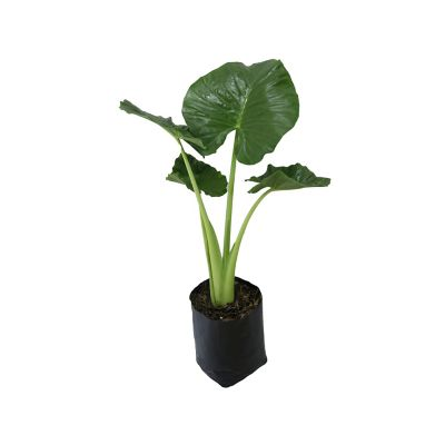 Planta hoja elegante