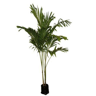 Planta palma kerpis b20