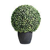 Mini Ball Boxwood 50 cm