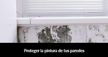 Proteger la pintura de tus paredes