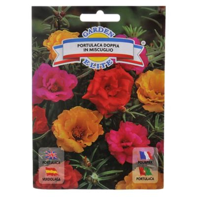 Paquete Flores Boca De Sapo Mix